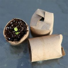 DIY instructions plus the pros and cons of making seed starting pots from toilet tissue rolls, newspaper, paper pulp, egg cartons, and more.