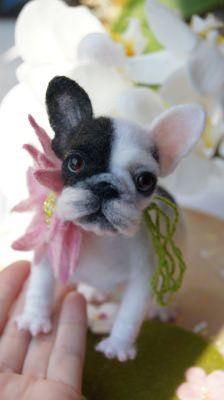 main picture of The French bulldog puppy and flower :-)