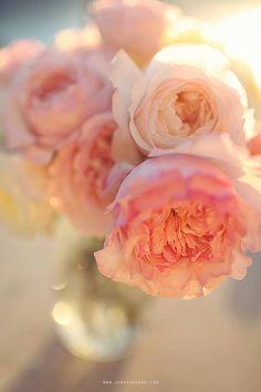 Peach, blush and powder pink, soft yellow, cream and grey blue