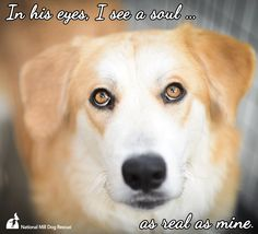 In his eyes, I see a soul as real as mine. #NMDR #rescue #mansbestfriend