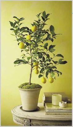 Reminds me of the beautiful lemon and orange trees that we saw on the Sorrento leg of our Italian honeymoon. <3