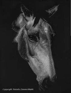 """Elegant Equine"" Original scratchboard portrait 18 by 14 Scratchboard Art, Horse Drawings, Zimmerman, Wildlife, Horses, Portrait, Elegant, Artist, Animals"