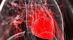 As células-tronco regeneram o tecido cardíaco dani...