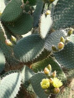 Planet Desert provides you Cactus Identification, as well as Cacti and Succulent Identification to its clients. As a business with years of experience we ensure that our clients have the right information by their side at all times. We are a family owned business and ensure that our clients have the best in class product and service by their side through us.