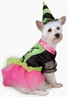 5 Shy Dogs in Halloween Costumes The Pet's Planet