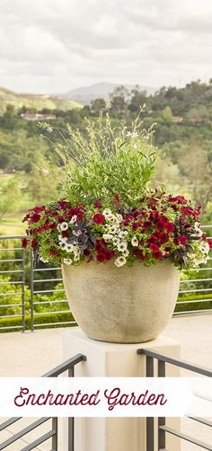 Supertunia Black Cherry is a favorite of many, and it is even better in this container creation called Enchanted Garden. Shade Plants Container, Container Flowers, Flower Planters, Garden Planters, Container Gardening, Flower Pots, Head Planters, Front Porch Planters, Diy Planters Outdoor