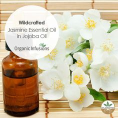 Organic Infusions presents pure, steam distilled, therapeutic grade, Wildcrafted Jasmine Essential Oil in Jojoba Oil (a blend of Jasminum sambac and grandiflorum). Jasmine Essential Oil, Therapeutic Grade Essential Oils, Aromatherapy Oils, Jojoba Oil, 100 Pure, Essentials, Presents, Organic, Pure Products