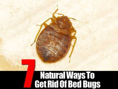 ~Haven't heard so much about infestations recently, but just in case this becomes a problem for any of us...~
