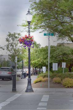 @visco_lights #decorative #streetlighting #mainstreet #oregoncity #Oregon #streetscape #flowerbasket