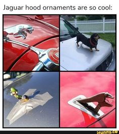 The best car brands in the world car memes funny hilarious Top Memes, Best Memes, Dankest Memes, Stupid Funny Memes, Funny Relatable Memes, Funny Posts, Really Funny, Funny Cute, Haha Funny