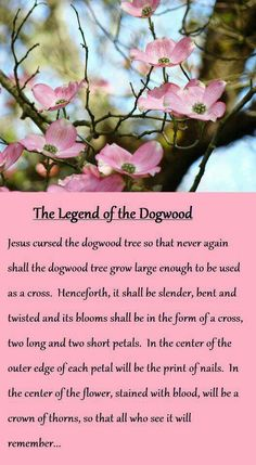 The Legend of the Dogwood; Language of Flowers - Adversity