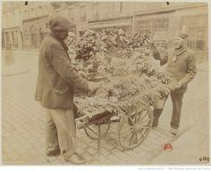 [Fleuriste] : [photographie] / [Atget] 1898-1900