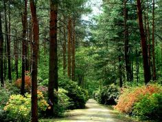 Jeli Botanical Garden in Hungary