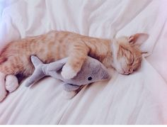 favd_cutencats-July 27 2017 at 04:54PM