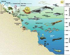 Week 19 Ocean zones