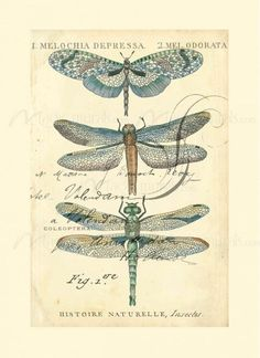 Dragonfly Ephemera I - Mandala - kunst Éphémères Vintage, Images Vintage, Vintage Labels, Vintage Ephemera, Vintage Paper, Vintage Prints, Dragonfly Art, Pics Art, Stretched Canvas Prints