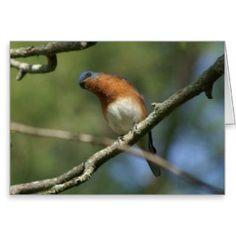 Bluebird, Greeting Card. Greeting Card