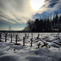#snow #sun