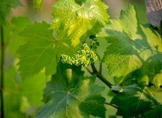 Soluţie 100% eco împotriva manei | Paradis Verde Paradis, Salvia, Nature, Mai, Terrariums, Green, Insects, Plant, Naturaleza