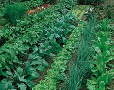 Large Vegetable Garden Layout Plans | Cher Shots: Something to Ponder: