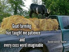 Haaaahaa!! I spend a lot of time chasing my goats around!   I wouldn't have it any other way though