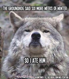 I ate the groundhog funny quotes quote lol funny quote funny quotes humor groundhogs day