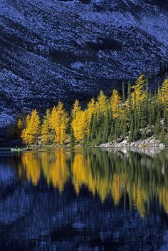 Autumn, Alpine Larch Trees, Lake Agnes Photograph by John Sylvester - Autumn, Alpine Larch Trees, Lake Agnes Fine Art Prints and Posters for Sale