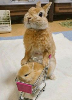 Small Animal Products Small Pets Bunny & baby bunny go shopping The post Small Animal Products appeared first on Katzen. Bunny Love, Cute Bunny, Bunny Rabbit, Cute Little Animals, Cute Funny Animals, Fluffy Cows, Baby Animals Pictures, Animals Dog, Cat Dog