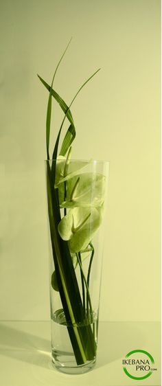 Gift of flowers IkebanaPRO.com Delivery in Brussels region, Belgium +32-479 451…