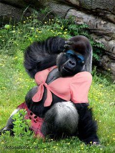 gorila - Pesquisa Google
