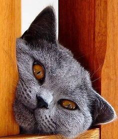 Did someone say tuna