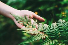 Young Girl Touching Holding Fern Leaf In Summer Park Forest. Clo by Grigory_bruev. Young Beauty Girl Woman Touching Holding Fern Leaf In Summer Park Forest. Close Up Of Female Hand. Concept Of Nature,. Artificial Indoor Plants, Indoor Ferns, Girls With Red Hair, Autumn Park, Design Movements, Photos For Sale, Stock Photos, Why Do People, Faux Plants