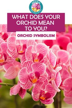 Read the complete guide to Orchid Symbolism and discover what your orchid means to you. Orchids come in many different colors and varieties each with a different meaning.