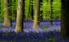 Enchanted forest 1 -
