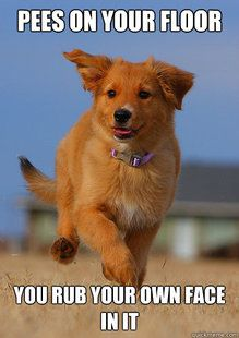 Meme Alert: Ridiculously Photogenic Puppy