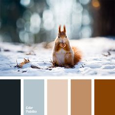 Color Palette No. 1101