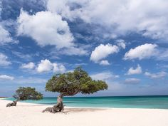 Eagle Beach, Aruba. #caribbean