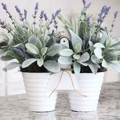 Lavender and lambs ear.  The perfect combination.