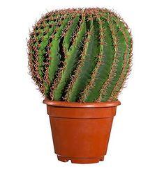 Wendebettwäsche »Kaktus«, CASATEX   Bettwäsche schlafzimmer ...