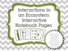 Ecosystems for Interactive Notebook pages - abiotic, biotic, biodiversity, food chains, food webs, energy pyramid, predator/prey, consumer/producer, parasite/host, biomes, human impact on ecosystems, Charles Darwin, natural selection and more.