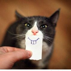 A simply wonderful cat. via Why Evolution is True