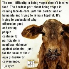 This is the perfect summary of how vegans feels.