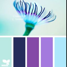 Light blue green a8edb4.     Navy 12343e.     Purple 964ba1.    Lilac a970a6.   Light blue 96c9dd