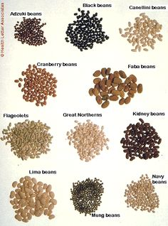 Add to planting list for 2012: Great Northern & Canellini beans  Maybe try Navy beans & Cranberry beans