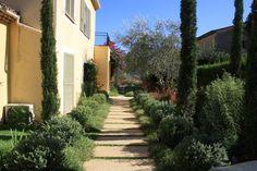 Main entrance walkway with cypress, olive tree, coastal rosemary and Mexican fleabane. By Stefana Savin - Garden Designer on the French Riviera - Monaco - Saint Jean Cap Ferrat. www.riviera-gardens.com