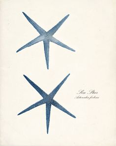 Sea ShellsTwo Blue Vintage Sea Stars Wall by vintagebytheshore, $14.00