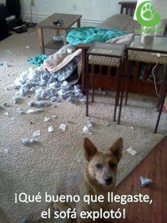¡Qué bueno que llegaste, el sofá explotó!