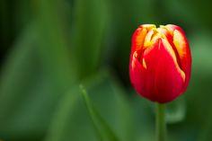 en zarif çiçeklerden birisi