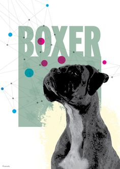 Dog Breed Posters - Boxer. Click to find more breeds Boxers, Koi, Dog Breeds, Movie Posters, Handmade, Crafts, Diy Dog, Manualidades, Craft