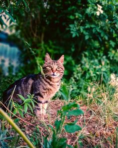 Cat photography Cat Photography, Cats, Animals, Instagram, Gatos, Kitty Cats, Animaux, Animal, Cat